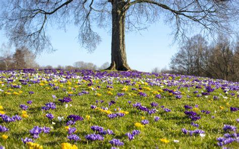 Der Garten Im März  Garten Europa
