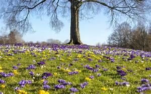 Garten Im März : der garten im m rz garten europa ~ Lizthompson.info Haus und Dekorationen