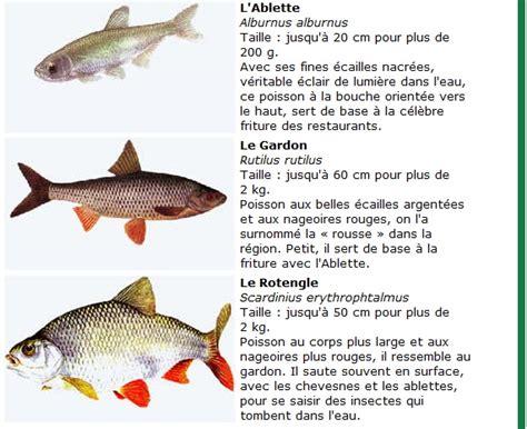 nourriture de choix les poissons de rivi 232 re petits et gros