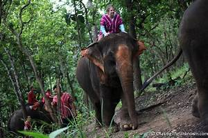 An Elephant Ride to Remember - Chasing the Unknown