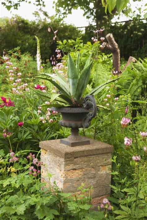 Pflanzen Portraet Agave pflanzen portr 228 t agave zimmerpflanzen garten pflanzen