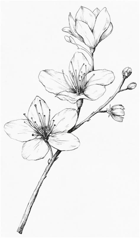 Épinglé par Kristina Reynolds Haney sur Botanical Black/White Illustrations en 2019 | Tattoo