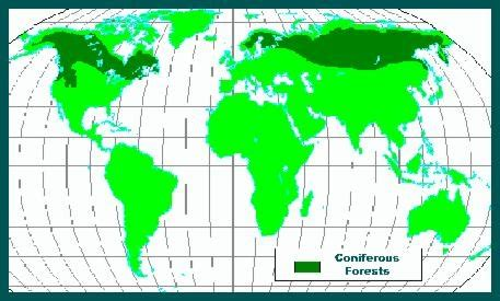 coniferous forest map forest pinterest forests  maps