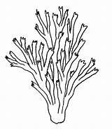 Coloring Pages Seaweed Cliparts Coral Drawing Draw Attribution Forget Link Don sketch template
