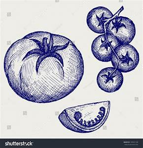 Tomatoes On The Vine. Doodle Style Stock Vector ...