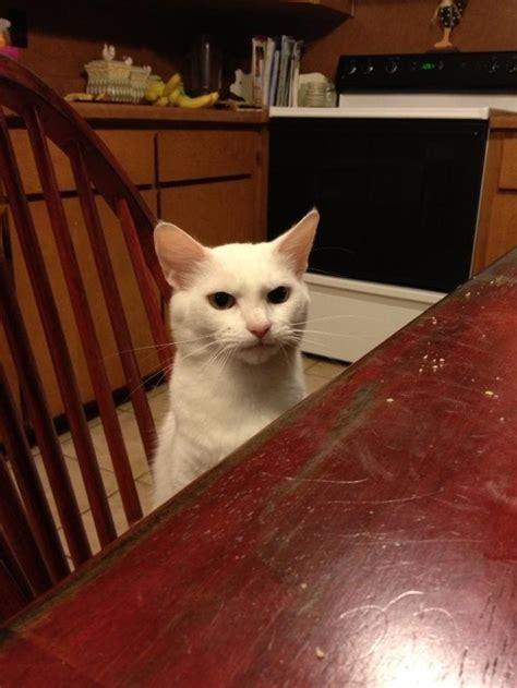 las mejores  imagenes de gatos de todos los tiempos