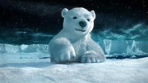oso polar   fondos de pantalla  wallpapers