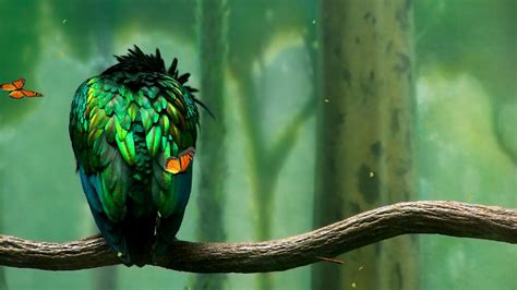 Animated Bird Wallpaper - green bird animated wallpaper