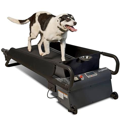 Laufbänder Für Hunde