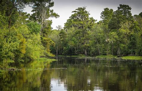 10 Reasons to Visit Houma, Louisiana   CatchCarri.com