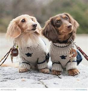 Dachshunds in sweaters :) | Fun | Pinterest | Blog, Ugly ...
