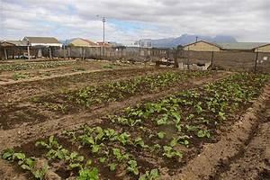 School Garden Programs And Food Security Pulitzer Center