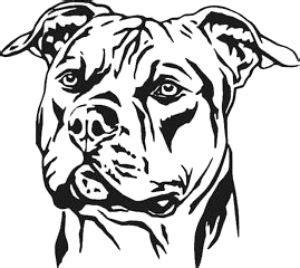 pin  charlotte gebo cobb  ideas pitbull drawing
