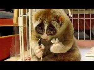 Cute Lemur Type... Cute Lemur Quotes