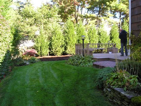 Backyard Privacy Landscaping by We Need Some Backyard Privacy With The New Parking Lot