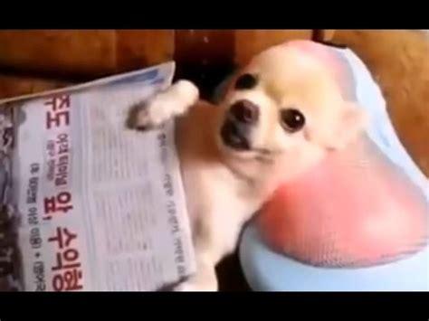 funny   funny animals   youtube