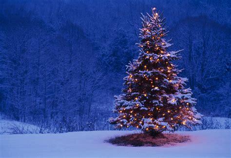 snow covered christmas trees indigo crossing