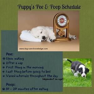 house training a puppy fast what to expect and what to do With the dog house training