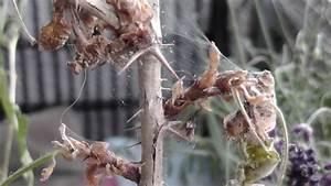Spinnmilben Natürlich Bekämpfen : spinnmilben an zimmerpflanzen bek mpfen mit glasreiniger pflanzen pinterest ~ Buech-reservation.com Haus und Dekorationen