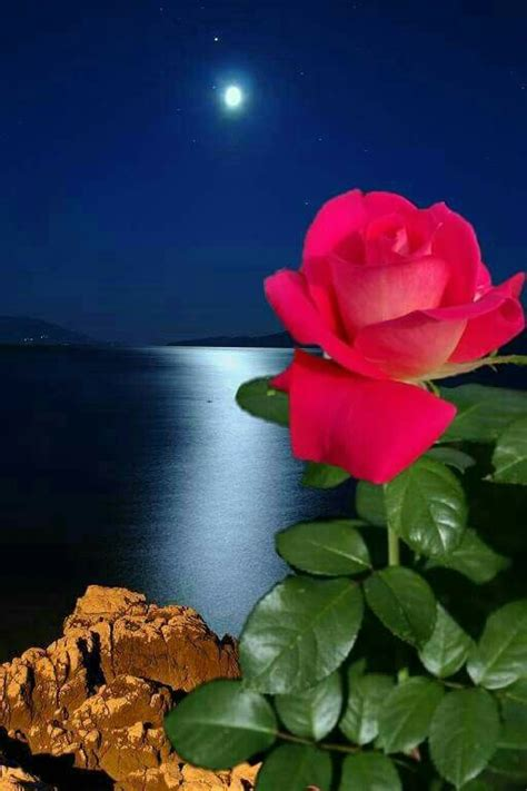epingle par  anh sur  beautiful roses  fb  anh