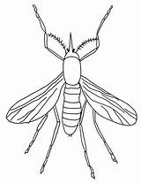 Coloring Mosquito Insect Sheet sketch template
