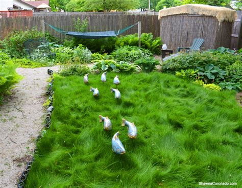 mow grass update  fish   garden