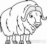 Ox Musk Clipart Outline Clip Muskox Animals Cliparts Coloring Pages Oxen Template Clipground Graphics Results Intended Letters Example Panda Arctic sketch template