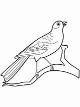 Coloring Canary Birds Ausmalbilder Kanarienvogel Colorear Dibujos Canario Designlooter Malvorlagen Ausdrucken Kostenlos Zum Imprimir Gratis Recommended sketch template