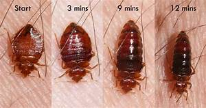 bed bugs insects in the city With bed bugs water