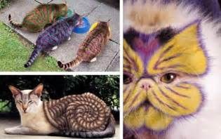 creative cats creative grooming design ideas for stylish pets