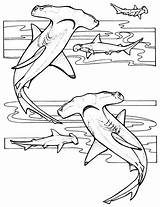 Coloring Sharks Children Pages sketch template