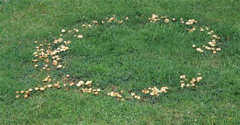 Pilze Garten Entfernen by Pilze Im Rasen Bek 228 Mpfen Pilze Im Rasen Bek Mpfen Die 5