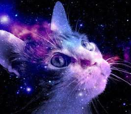 galaxy cats i see space of purple by kkpaw on deviantart