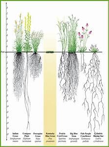 Plants For Inland Lakes - Michigan Natural Shoreline ...
