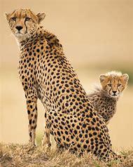 Amazing Wildlife Animal Pics