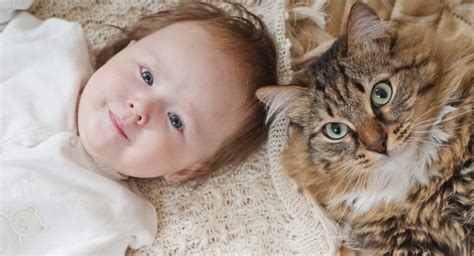 how to de stress you cat just some pictures of with cats to de stress you thehealthsite
