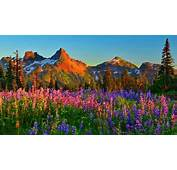 Mountain Wildflowers 331981  Wallpapers13com
