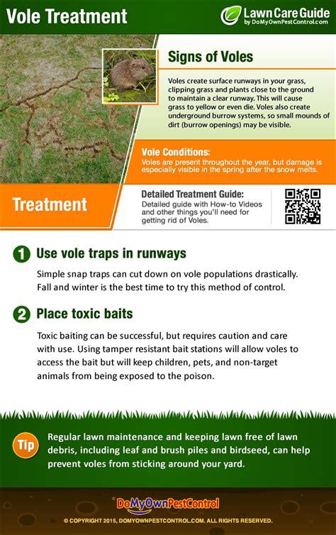 how to get rid of voles how to get rid of voles vole control treatment removal