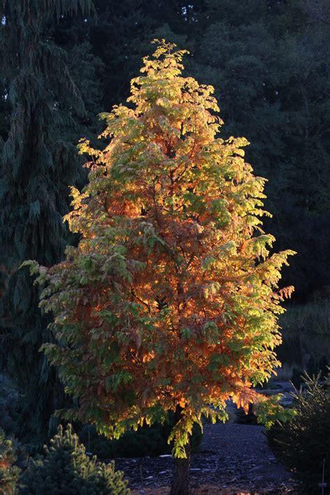 flora  blog fall color  buchholz nursery