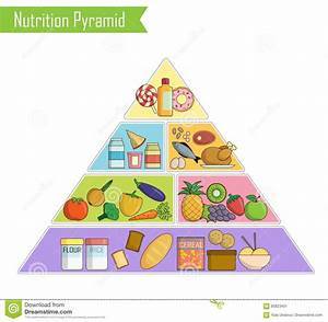 Healthy Food Plate Chart Vector Illustration