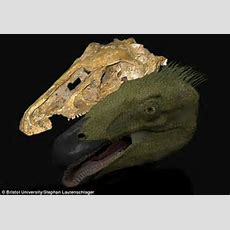 Mystery Of Why Dinosaurs Had Beaks Solved Hard Snouts Stopped Their Skulls Deforming When They