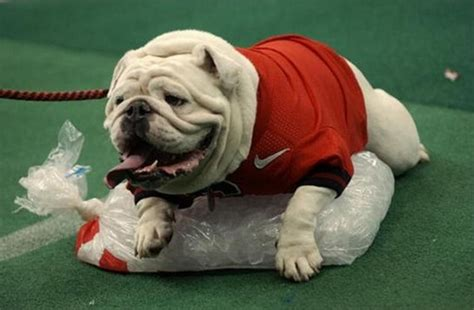 I Think Your Football Team Needs A New Mascot