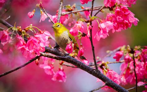 bird wallpapers hd pixelstalknet