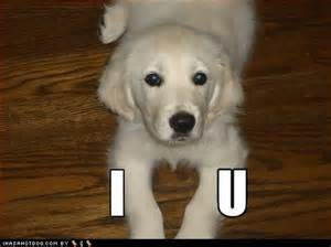 I Love You Puppy Images Cute Dogs
