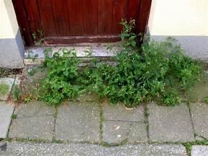 Unkraut Zwischen Steinen : gartenarbeit ideen unkraut begr nung h sslicher fl chen ~ Michelbontemps.com Haus und Dekorationen