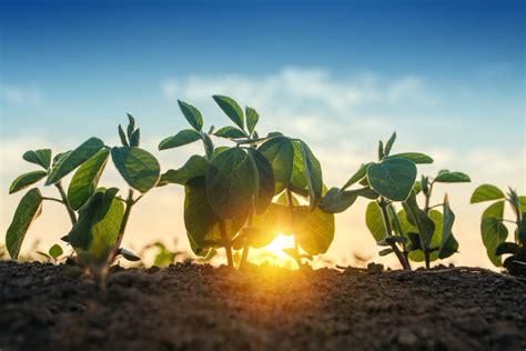 Mūsu risinājumi - Augu barības vielas