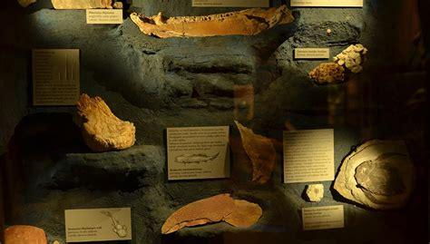 Zinātkāro ģimeņu sestdienas | Latvijas Nacionālais dabas muzejs