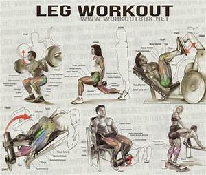 Leg Workout - Healthy Fitness Workout Leg Calves Abs Core