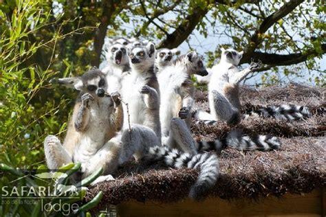 ecole de cuisine ile de dormir avec les tigres au zoo de la flèche easyvoyage