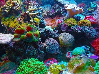 coral reef animal adaptations lesson  kids studycom